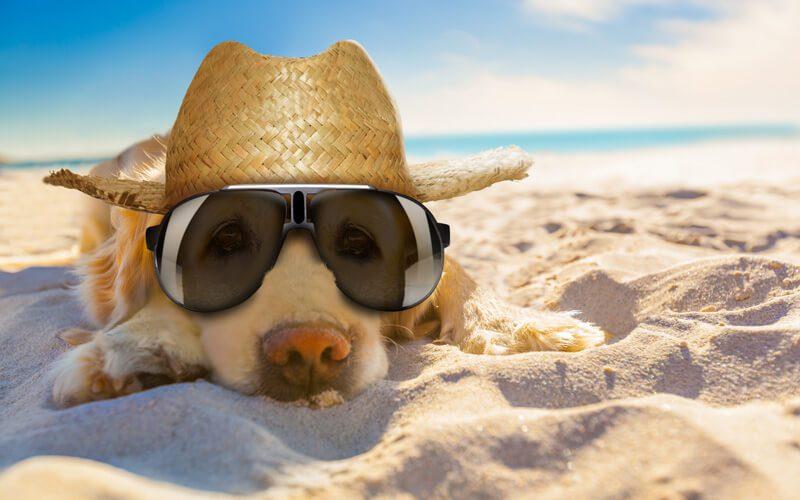 Breeze Through the Dog Days of Summer